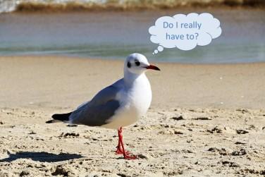 Bird for Blog